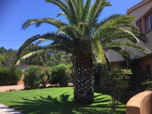 Yucca_villa_corse_exterieurs (10)