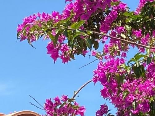 Yucca_villa_corse_exterieurs (12)