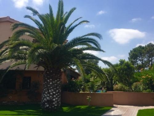 Yucca_villa_corse_exterieurs (3)