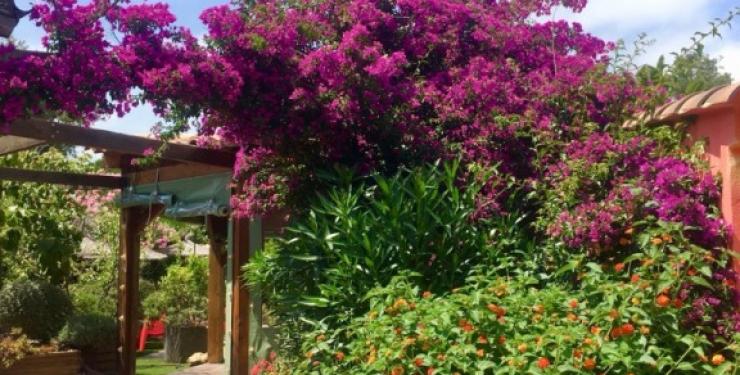 Yucca_villa_corse_exterieurs (5)