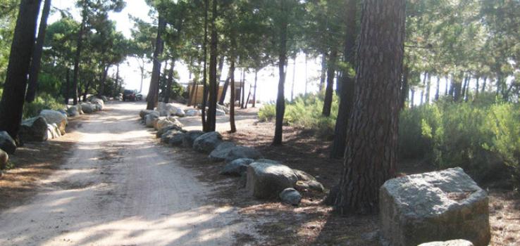 Chemin pour la plage de Pinarello dans les pins